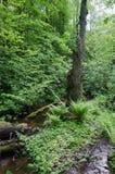 Floresta velha imagens de stock