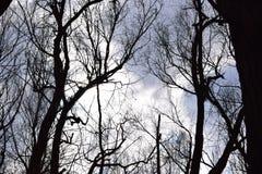 Floresta velha Imagens de Stock Royalty Free