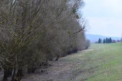 Floresta velha Imagem de Stock