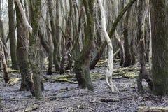 Floresta velha Fotos de Stock Royalty Free