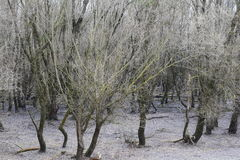 Floresta velha Foto de Stock