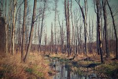 Floresta velha da mola no tempo ensolarado foto de stock royalty free