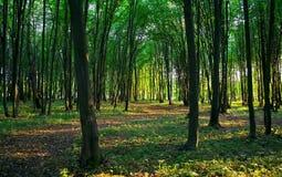 Floresta verde Fotos de Stock Royalty Free