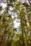 Floresta verde Foto de Stock