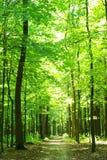Floresta verde Fotos de Stock