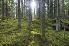 Floresta verde Imagem de Stock