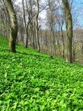 Floresta verde Imagens de Stock Royalty Free