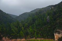 Floresta verde antes da chuva Fotografia de Stock Royalty Free