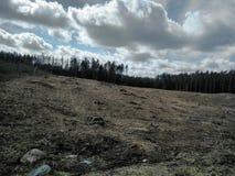 Floresta verde bly no céu foto de stock