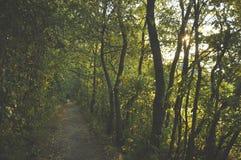 Floresta verde bonita imagens de stock