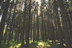 Floresta verde bonita imagem de stock