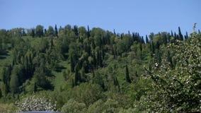 Floresta verde bonita video estoque