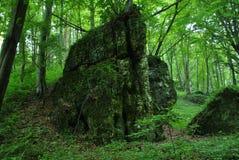 Floresta verde bonita Fotos de Stock