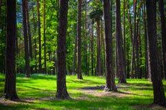 Floresta verde bonita com árvores e grama Foto de Stock