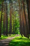 Floresta verde bonita com árvores e grama Imagem de Stock Royalty Free