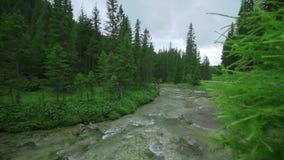 Floresta verde bonita na tarde com um córrego do fluxo da água fria no meio video estoque
