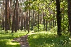 Floresta verde bonita no verão Fotografia de Stock Royalty Free