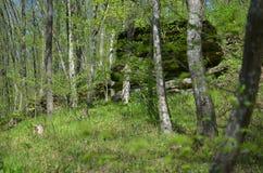 Floresta verde com árvores e grama Foto de Stock