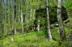 Floresta verde com árvores e grama Imagem de Stock