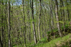 Floresta verde com árvores e grama Fotografia de Stock