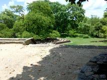 Floresta verde com construção antiga fotografia de stock
