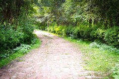 Floresta verde com estrada Foto de Stock Royalty Free