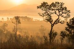 Floresta verde com raio de luzes na manhã Imagens de Stock