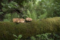 A floresta verde cresce rapidamente musgo da samambaia Imagens de Stock