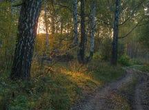 Floresta verde da mola em raios do sol Imagens de Stock Royalty Free