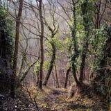 Floresta verde da mola em raios do sol fotos de stock royalty free