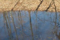 Floresta verde da mola em raios do sol Imagens de Stock