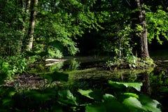 Floresta verde da mola em raios do sol Foto de Stock