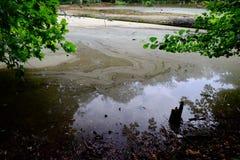 Floresta verde da mola em raios do sol Fotografia de Stock Royalty Free