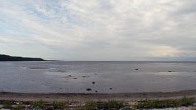 Floresta verde do mar branco contra o céu azul e as nuvens video estoque