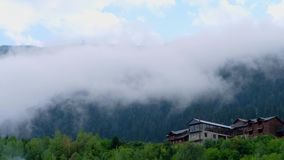 Floresta verde do pinho coberta com a névoa densa, Mestia, Geórgia filme