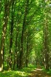 Floresta verde do verão Imagens de Stock Royalty Free