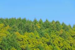 Floresta verde e céu azul foto de stock royalty free