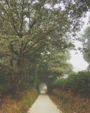 Floresta verde e nevoenta da natureza, Camino de Santiago imagens de stock