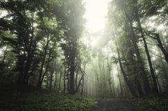 Floresta verde encantado com névoa e brilho claro Imagem de Stock Royalty Free