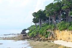 Floresta verde litoral tropical densa com as árvores altas na costa de mar - ilhas Nicobar de Littoralis do Manilkara de Andaman, foto de stock royalty free
