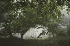 Floresta verde misteriosa com névoa Imagens de Stock Royalty Free