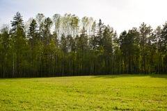 Floresta verde na borda do campo fotografia de stock royalty free