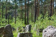 Floresta verde na linha da segunda guerra mundial, região da defesa de Leninegrado, Rússia imagens de stock