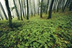 Floresta verde na primavera Imagem de Stock Royalty Free