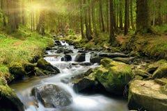 Floresta verde no tempo de mola Imagens de Stock Royalty Free