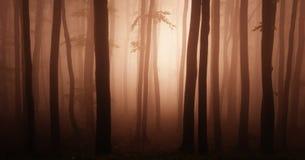 Floresta vermelha abstrata Imagens de Stock
