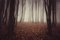 Floresta vermelha do outono com névoa misteriosa Imagem de Stock Royalty Free