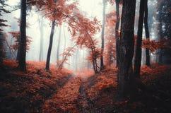 A floresta vermelha do outono encantou a cena da floresta com névoa misteriosa Fotos de Stock Royalty Free