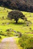 Floresta VII fotos de stock royalty free