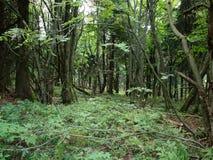 Floresta virgem nova Fotos de Stock Royalty Free